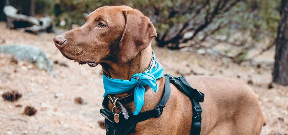 Hiking with a dog - the do's, don'ts, and essentials