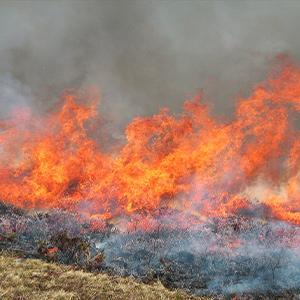 High Peak Barbecue Ban Imposed to Stop Wild Fires