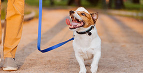 Dog Leads & Walking