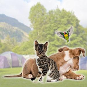 Wildlife & Pets