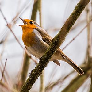 Bird Feeders & Food